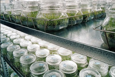Plant and Tissue Culture Media